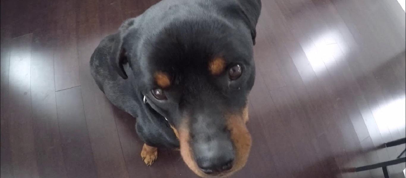 Σκύλος-«ψαράς» βάζει τα… γυαλιά στο αφεντικό του (βίντεο)