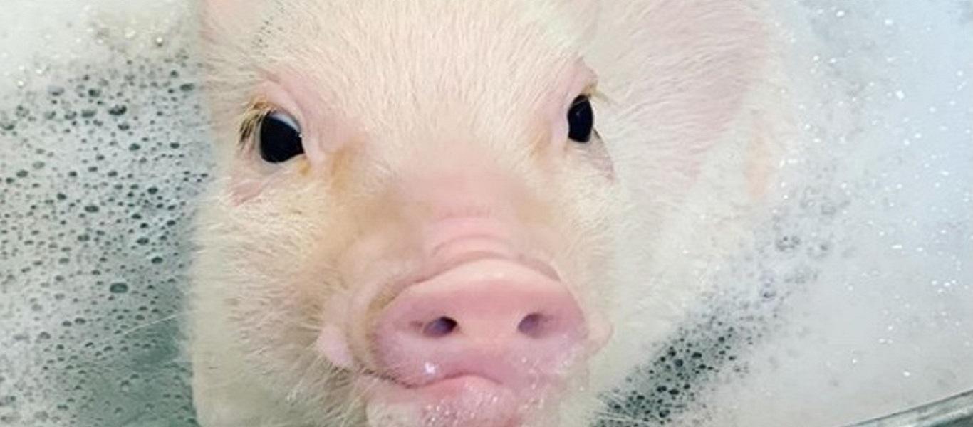 Ένα ροζ «μαργαριτάρι» στην μπανιέρα (φώτο-βίντεο)