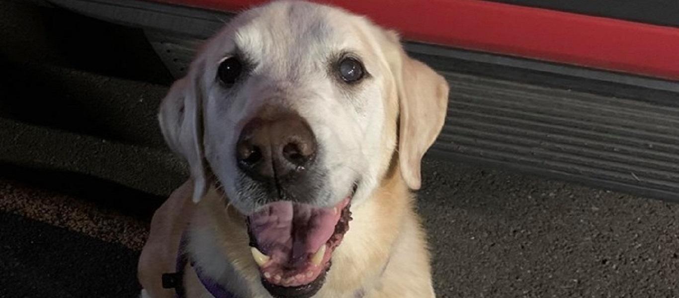 Καναδάς: Γυναίκα εγκατέλειψε τον σκύλο της σε πάρκο και αναζητείται από την αστυνομία (βίντεο)