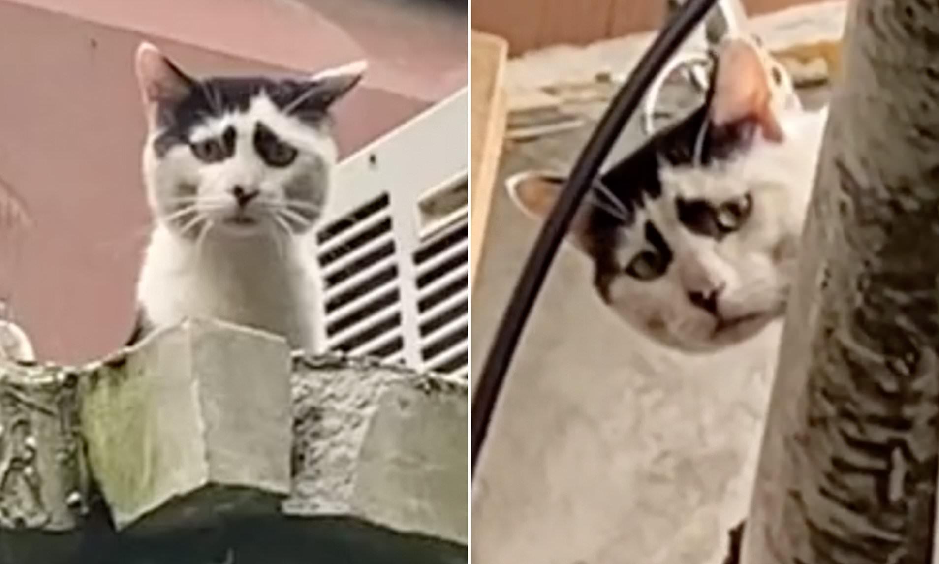 H… θλιμμένη γάτα που «τρέλανε» το διαδίκτυο (βίντεο)