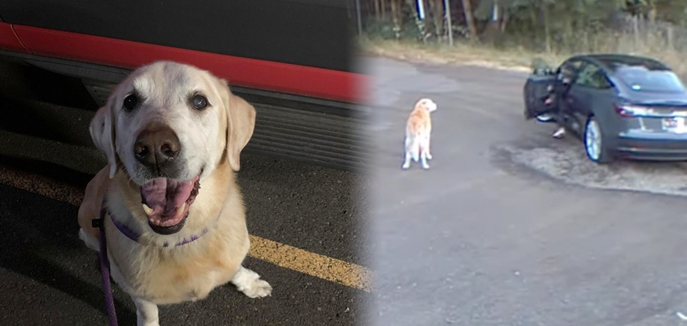 Ουάσιγκτον: Γυναίκα εγκαταλείπει τον σκύλο της στο δάσος και προκαλεί σάλο (βίντεο)