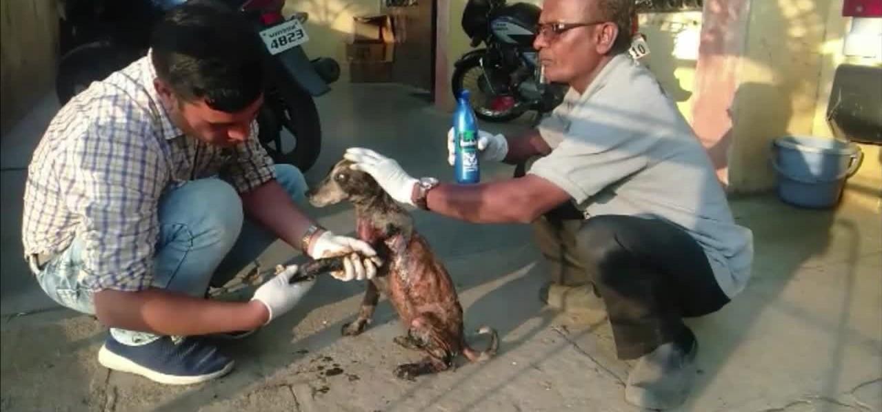 Ινδία: Ασφαλτόστρωσαν ζωντανό κουτάβι (βίντεο)