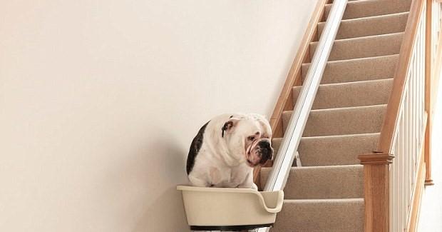 Νέα Υόρκη: Γυναίκα έφτιαξε ασανσέρ για να ανεβοκατεβαίνουν τα γέρικα σκυλιά της τη σκάλα (βίντεο)