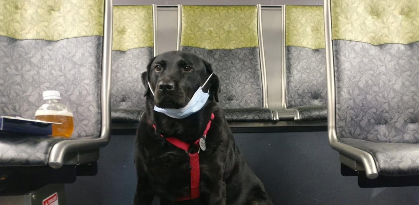 Σιάτλ: Σκυλίτσα παίρνει κάθε μέρα το λεωφορείο για να κάνει τις βόλτες της και γίνεται viral (βίντεο)