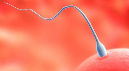 Εξωσωματική γονιμοποίηση με δωρεά ωαρίων