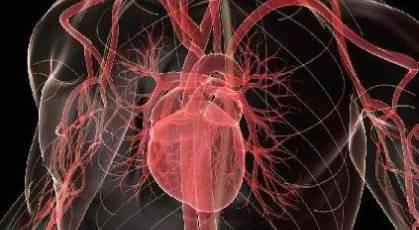 Αρτηρίες και αγγεία…κατά παραγγελία