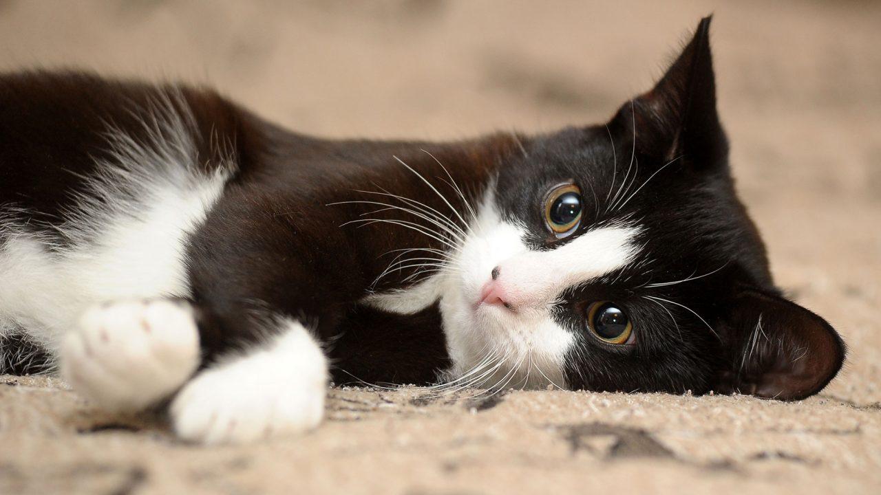 Αυτός είναι ο ιδανικός τρόπος για να χαϊδεύεις τις γάτες σύμφωνα με την επιστήμη