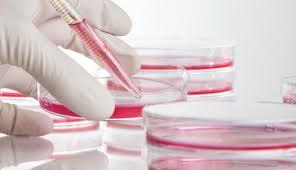 """Επιστήμονας θέλει να """"καλλιεργήσει"""" βλαστοκύτταρα στο διάστημα"""