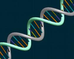 Πειραματική τεχνική τροποποιεί με ακρίβεια το DNA