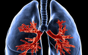 Επιστήμονες ανέπτυξαν τεχνητό πνεύμονα σε συνθήκες εργαστηρίου