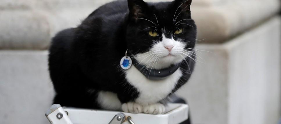 Ο γάτος ο οποίος ζει 4,5 χρόνια στο Φόρεϊν Όφις…συνταξιοδοτείται (φωτό)