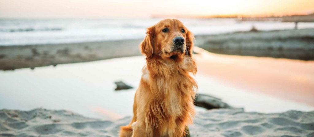 Κάνσας: Σκύλος ταξίδεψε 80 χλμ για να φτάσει στο παλιό του σπίτι (βίντεο)