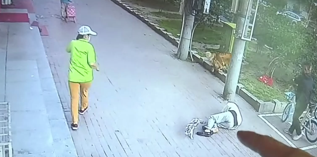 Κίνα: Γάτα έπεσε από πολυκατοικία πάνω σε παππού και τον τραυμάτισε σοβαρά (βίντεο)