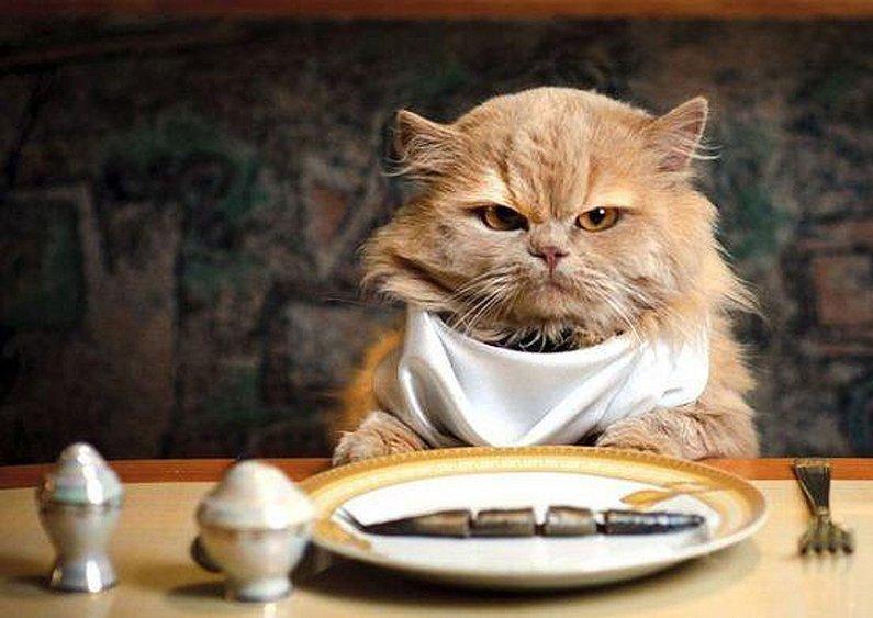 Πότε η γάτα μας δεν θέλει να φάει