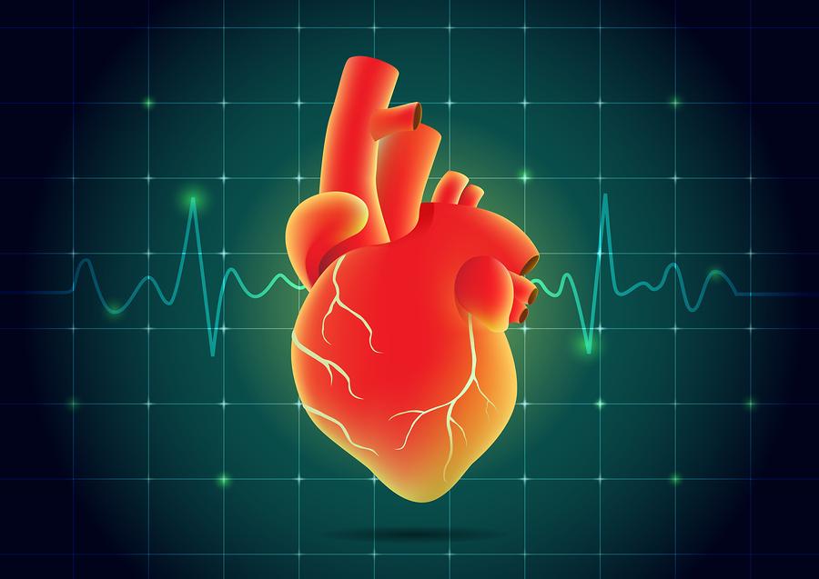 Παλμοί καρδιάς: Ποιές είναι οι φυσιολογικές τιμές ανάλογα με την ηλικία;