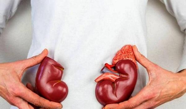 Βίντεο: Γιατί είναι ζωτικής σημασίας η σωστή λειτουργία των νεφρών στον οργανισμό μας;