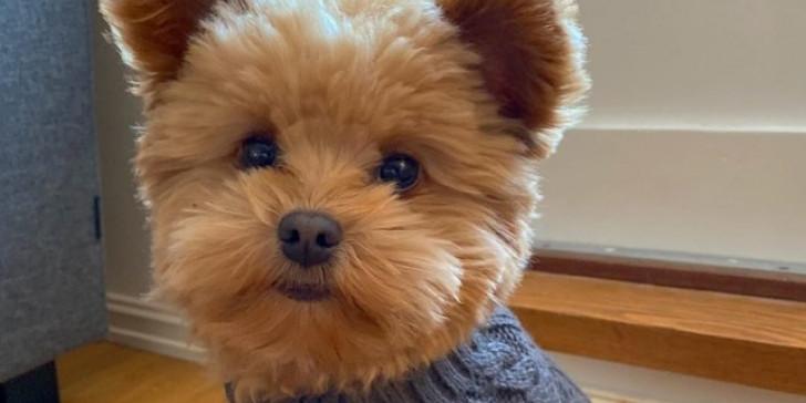 Πώς να σώσετε το σκυλάκι σας αν έχει φάει φόλα