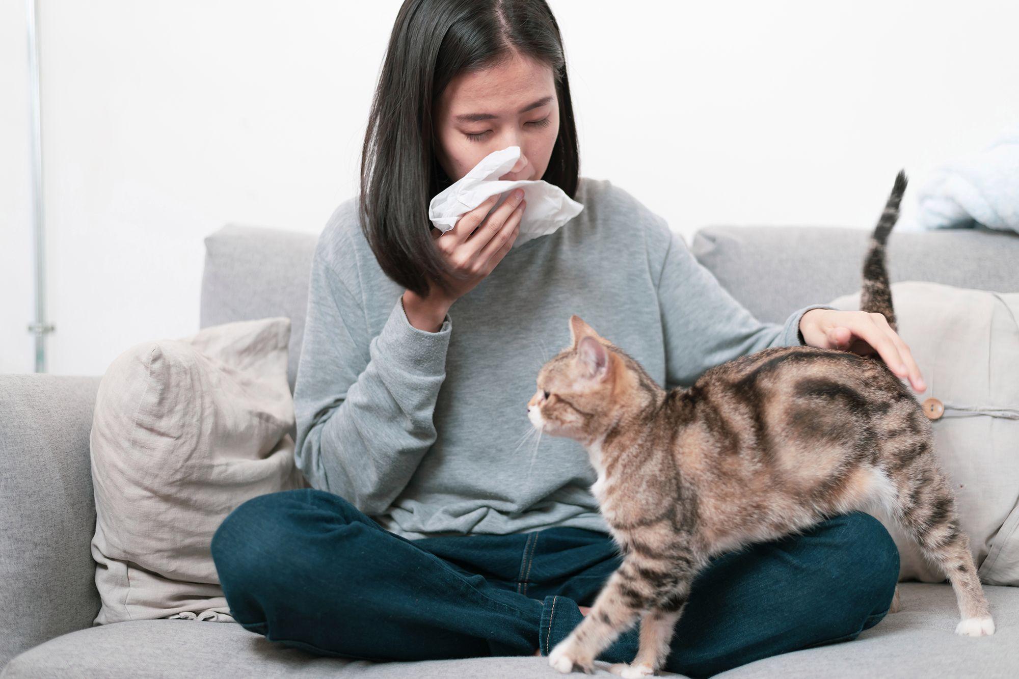 Αλλεργία στις γάτες; Κι όμως αντιμετωπίζεται!