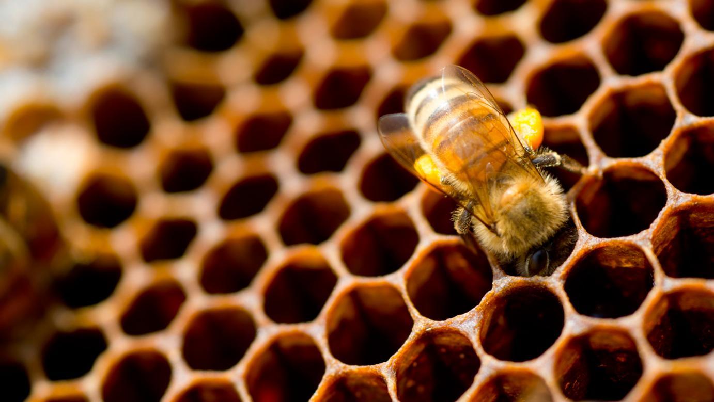 Mέλι και άλλα προϊόντα μέλισσας: Υπετροφές από την αρχαιότητα