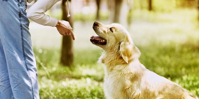 Ιδιοκτήτες σκύλων: 30 πράγματα που αν τα κάνετε πρέπει να σταματήσετε αμέσως! (βίντεο)