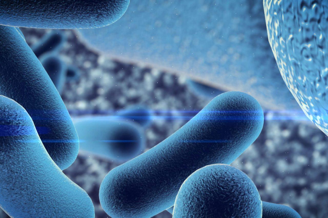 Προβιοτικά και πρεβιοτικά – Διαφορές και οφέλη
