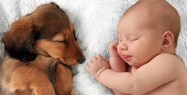 Ύπνος με το σκύλο μας: Πόσο ασφαλές είναι για τα παιδιά – Τί εκπληκτικό έδειξαν έρευνες (βίντεο)