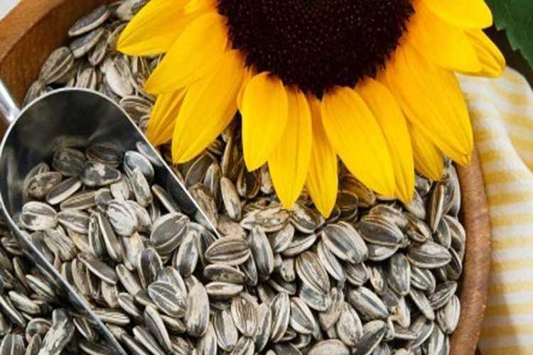 Ηλιόσπορος: Γιατί πρέπει να γίνει καθημερινή συνήθεια στην διατροφή μας