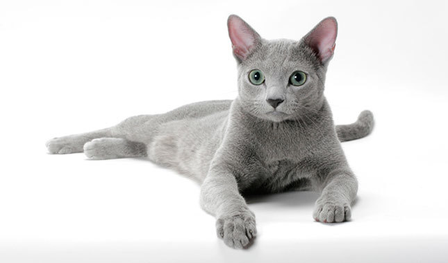 Το… ψυχολογικό προφίλ για τις ράτσες των γατών