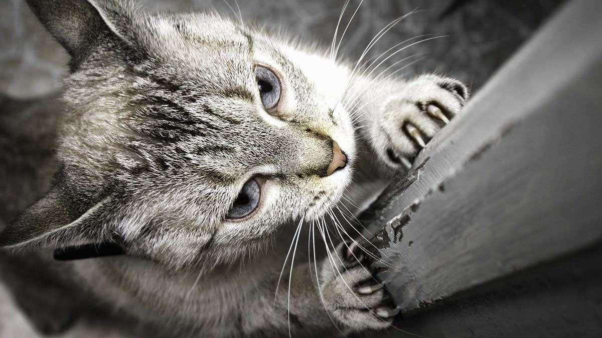 Η πανδημία κατέστρεψε την ησυχία των γατών προκαλώντας τους στρες