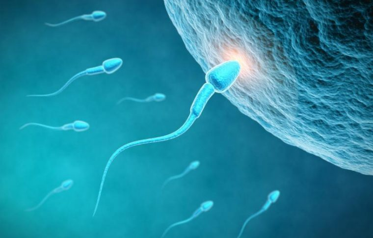Παραγωγή λειτουργικού σπέρματος στο εργαστήριο