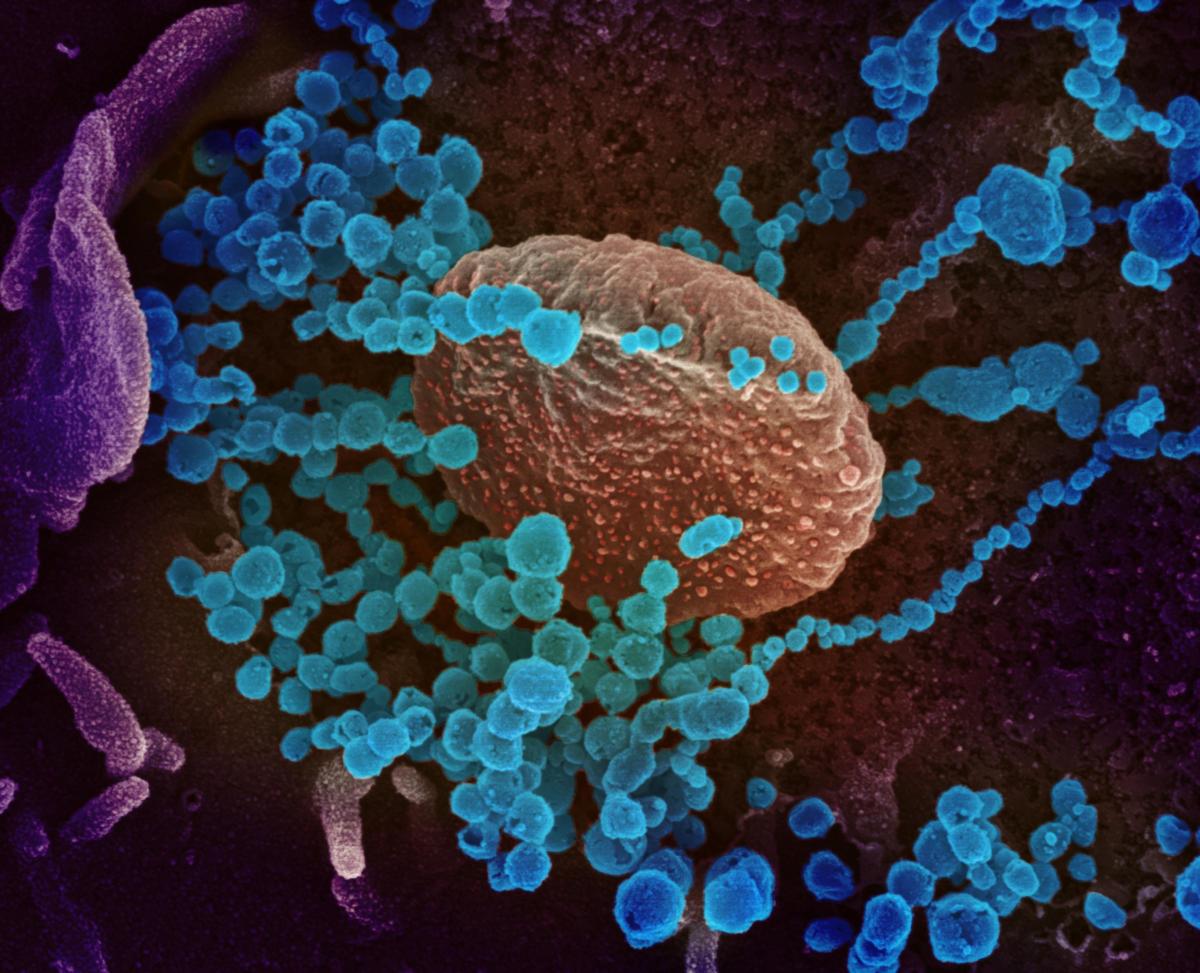 Τι συμβαίνει όταν δύο διαφορετικοί ιοί μολύνουν το ίδιο κύτταρο;